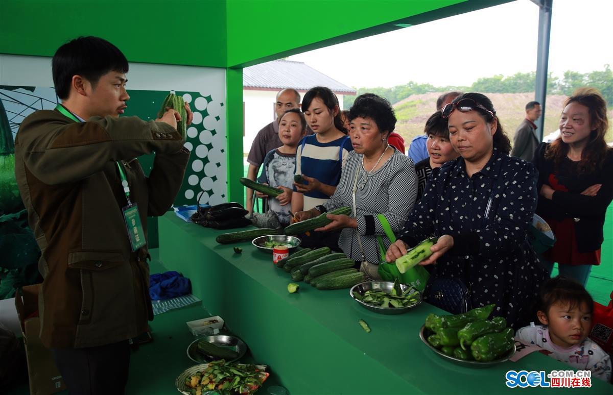 现代农业带来绿色生活 四川首届蔬菜品赏会在泸州开幕